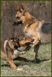 Besca und Hundefreund Arco