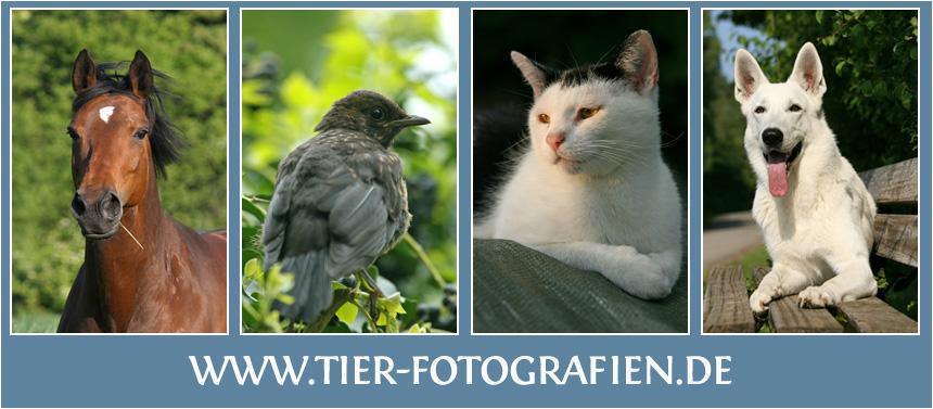 Tierfotografien - Tierfotos mit Herz